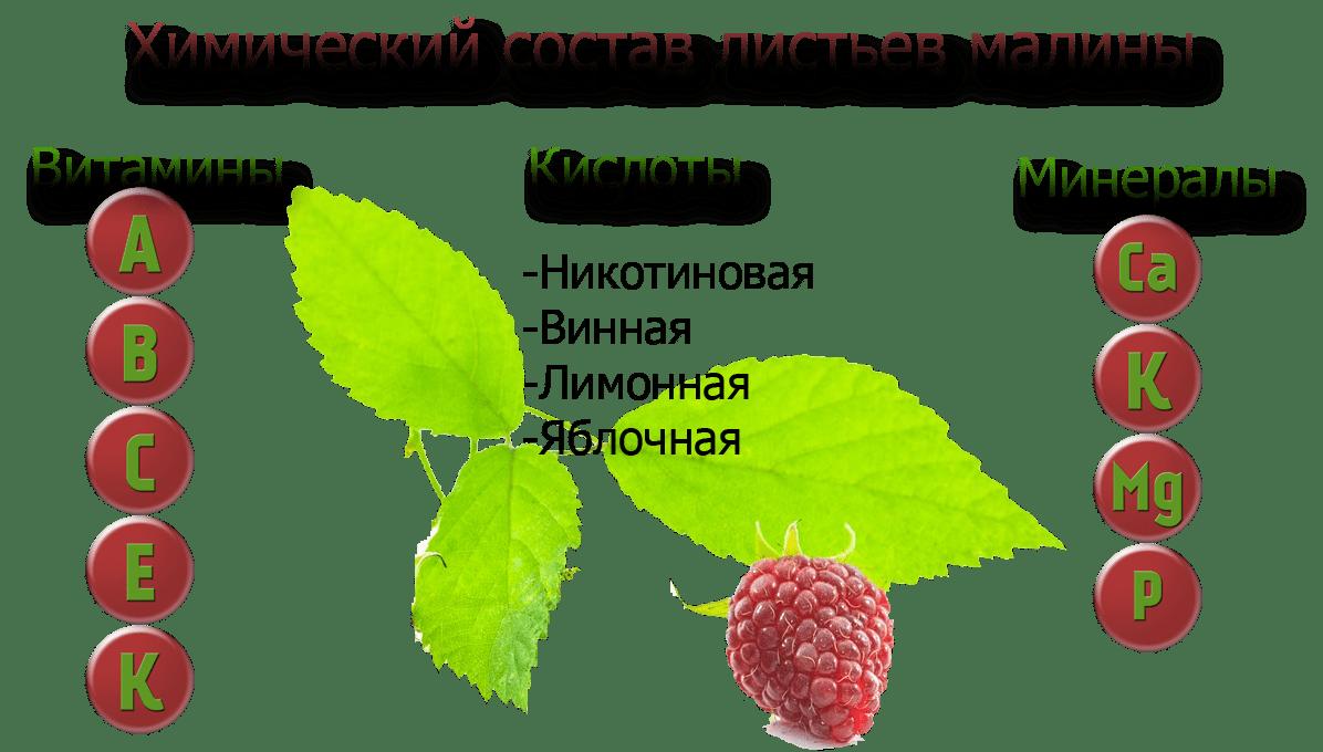 Химический состав листьев малины