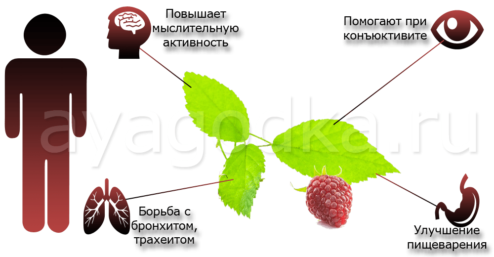 Малиновые листья Для детского организма
