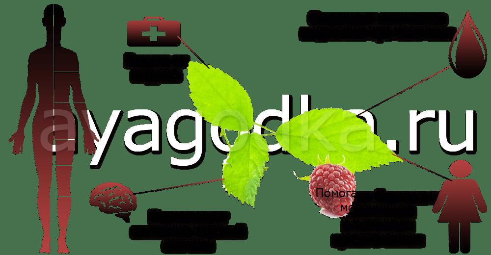 Малиновые листья Для женского организма