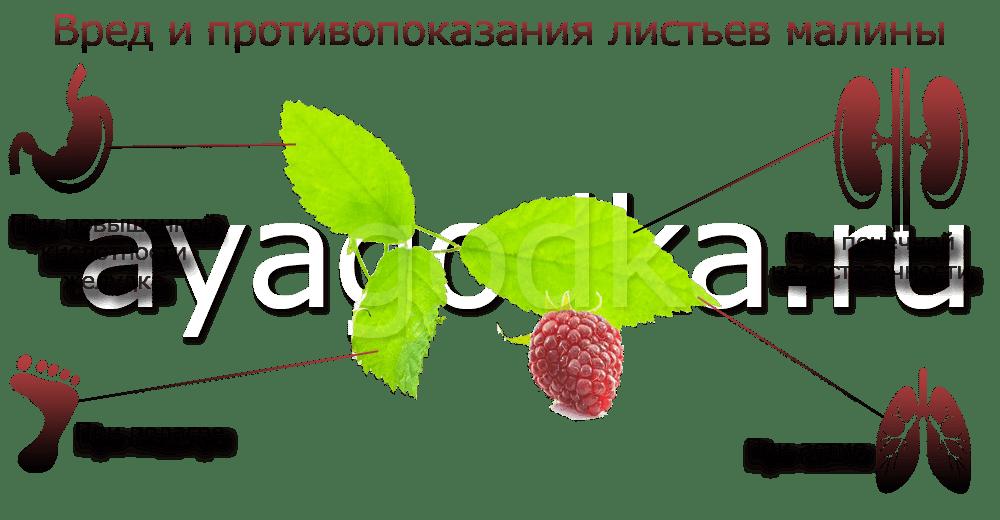 Вред малиновых листьев