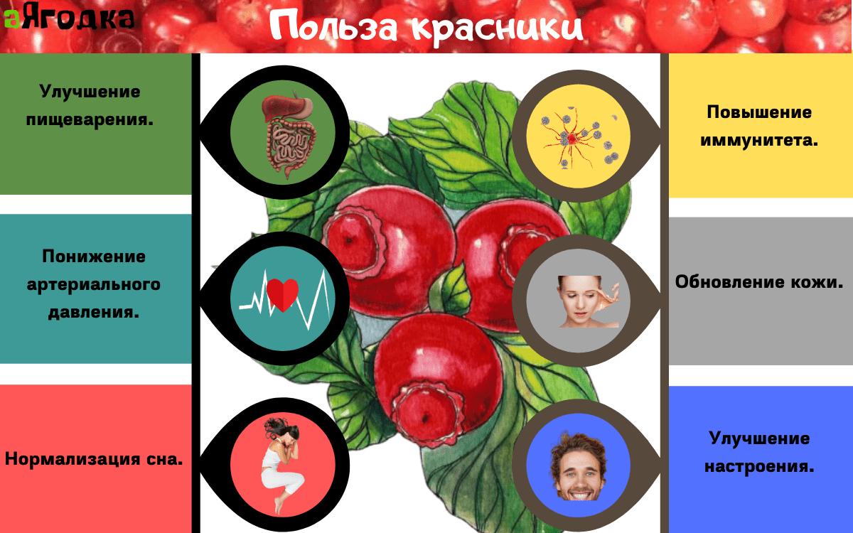 Картинка Польза красники