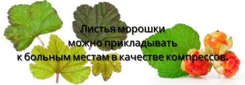 Морошка листья